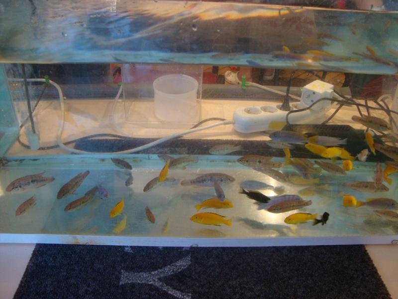 Bourse aux poissons le 10/10/2010 à Montdidier - Page 2 Dsc01623