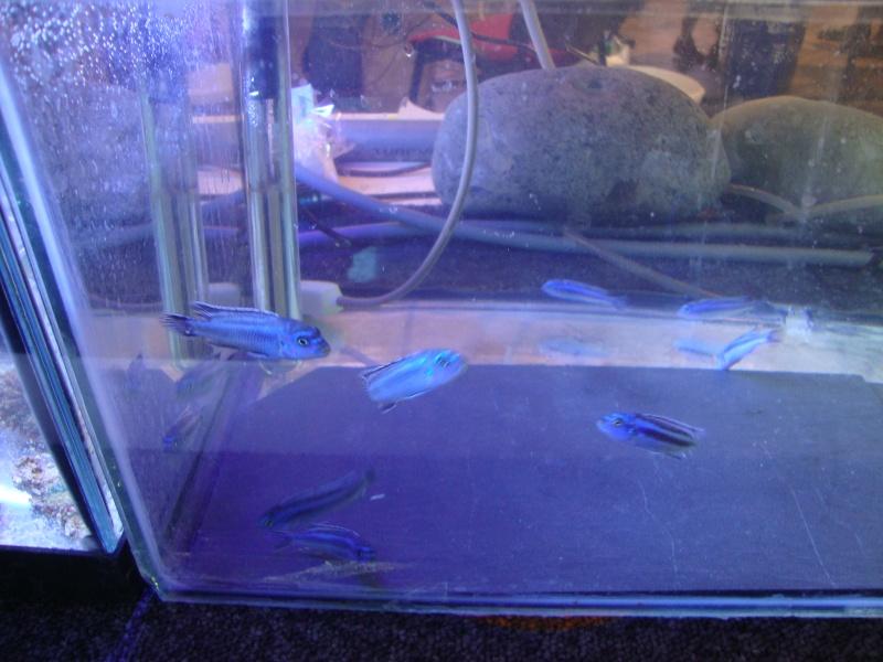 Bourse aux poissons le 10/10/2010 à Montdidier - Page 2 Dsc01624