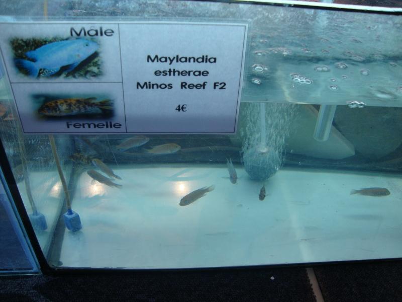 Bourse aux poissons le 10/10/2010 à Montdidier - Page 2 Dsc01625
