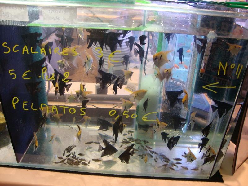 Bourse aux poissons le 10/10/2010 à Montdidier - Page 2 Dsc01628