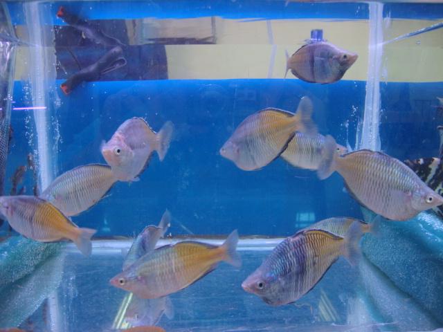 Bourse à Laon, le 24/10/2010 Dsc01720