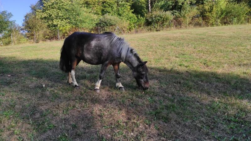 PRUNELLE - ONC poney née en 1986  - adoptée en octobre 2012 par Prosper - Page 4 11865011
