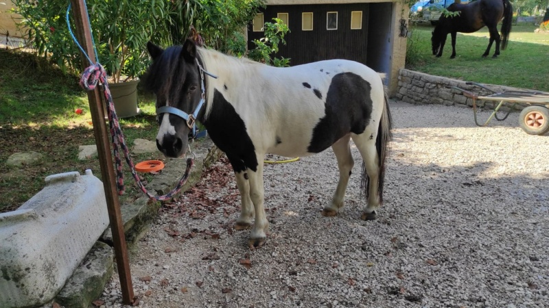 JINGER - ONC poney né en 2000 - adopté en octobre 2019 par Michèle 11877710