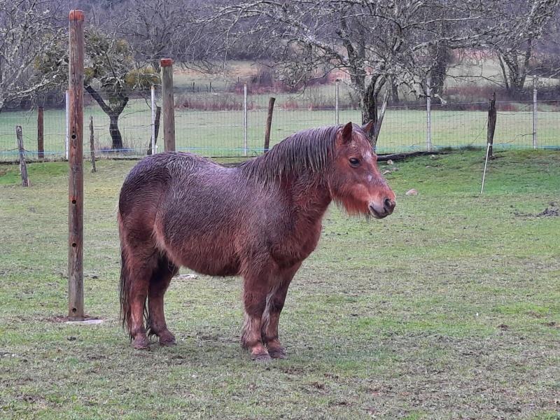 NOISETTE - ONC poney typée shetland née en 2000 - adoptée en juillet 2013 par Patrick  - Page 2 20210356