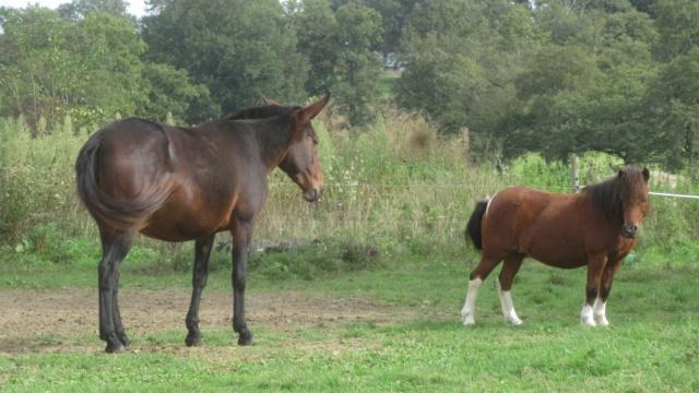 (87) ECLAIRE - ONC poney née en 2005 - A PARRAINER 24350910