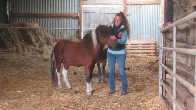 (87) DIEGO - ONC poney né en 2010 - A PARRAINER 24434911