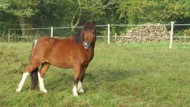 (87) ECLAIRE - ONC poney née en 2005 - A PARRAINER 24536710