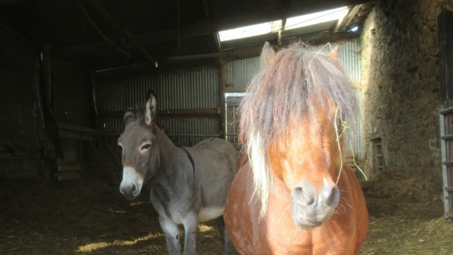 (87) DIEGO - ONC poney né en 2010 - A PARRAINER 24551611