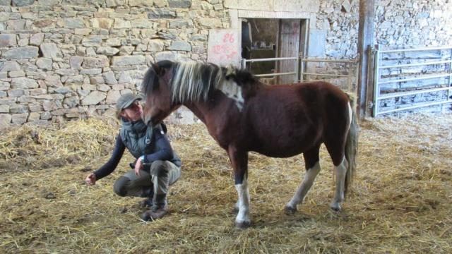 (87) DIEGO - ONC poney né en 2010 - A PARRAINER 24587210