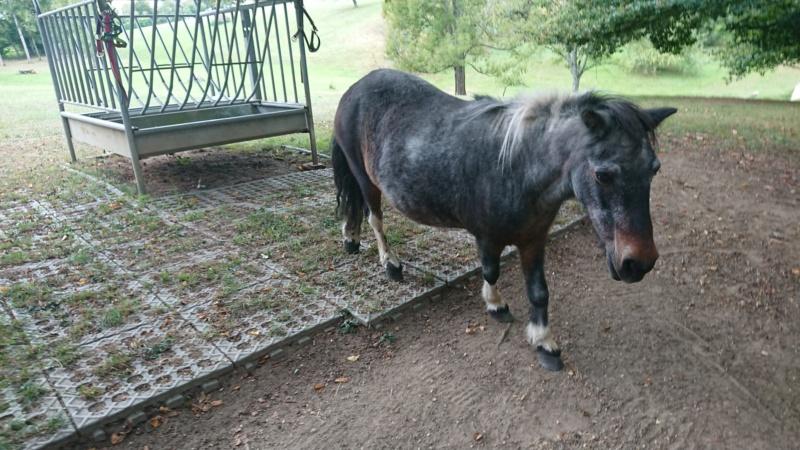 PRUNELLE - ONC poney née en 1986  - adoptée en octobre 2012 par Prosper - Page 4 69556810