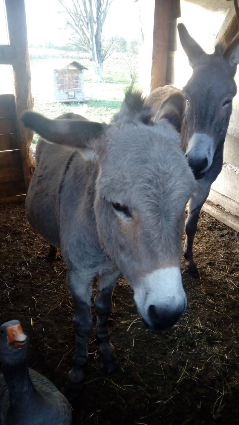 PRINCESSE JULIE - ânesse née en 2004 - adoptée en décembre 2012 par Michel 77053811