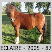 Galop Pour La Vie Eclair11