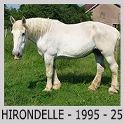 Galop Pour La Vie Hirond14