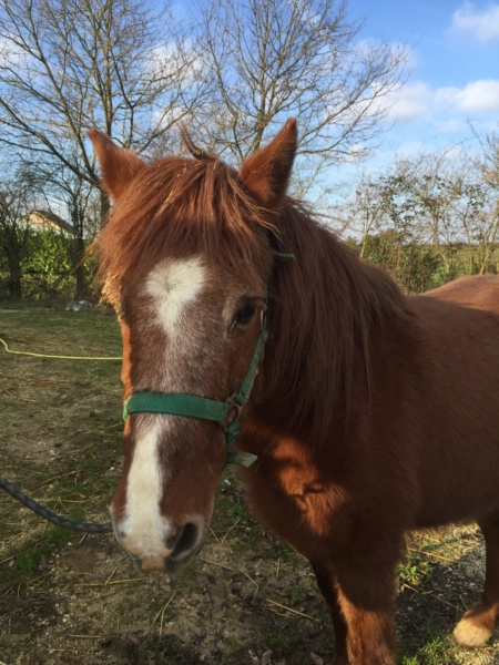 DOLLAR - OI type poney né en  1991 - adopté en juillet 2011 Img_0527