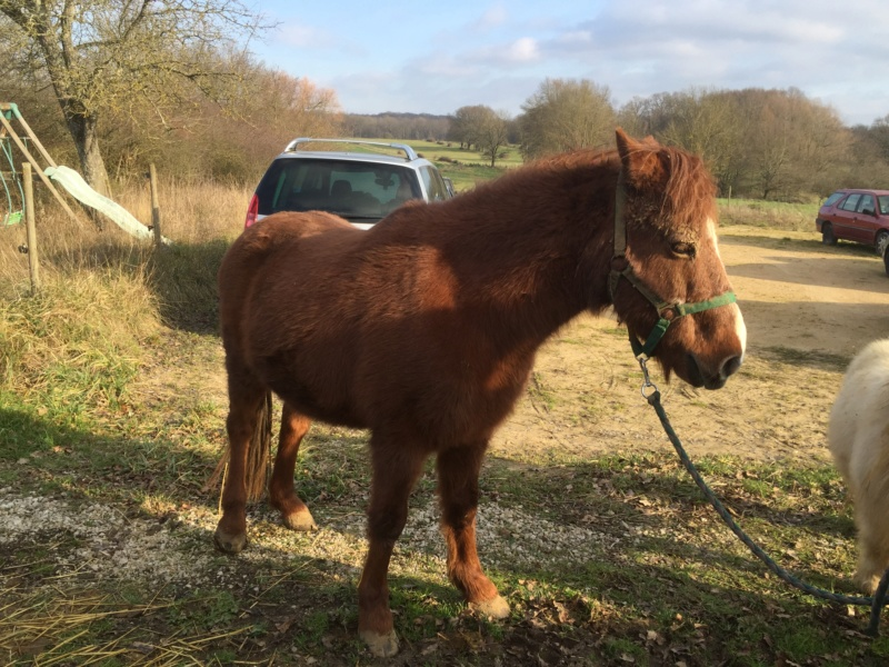 DOLLAR - OI type poney né en  1991 - adopté en juillet 2011 Img_0528