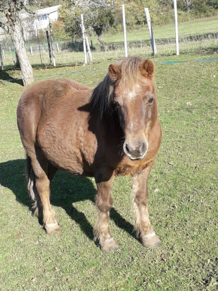 NOISETTE - ONC poney typée shetland née en 2000 - adoptée en juillet 2013 par Patrick  - Page 2 Img_2020