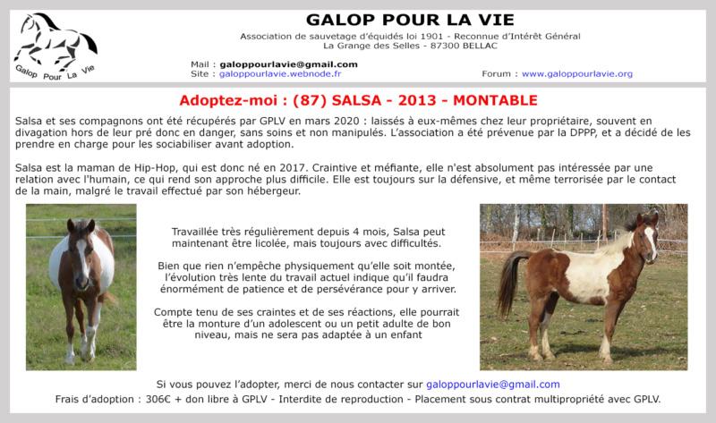 (87) SALSA - ONC Poney née en 2013 - NON MONTABLE - A ADOPTER (126 € + don libre) Salsav10