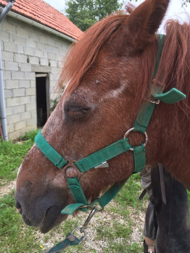 DOLLAR - OI type poney né en  1991 - adopté en juillet 2011 Whatsa35