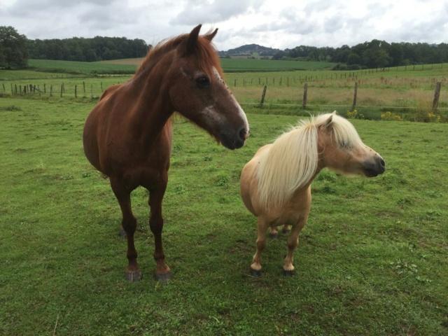 DOLLAR - OI type poney né en  1991 - adopté en juillet 2011 Whatsa36