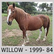 Galop Pour La Vie Willow10
