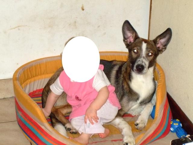 SOS Roxy croisé berger/setter 6 ans  (6 ans de refuge) - AID Animaux à Chateaubriant (44) Roxy10