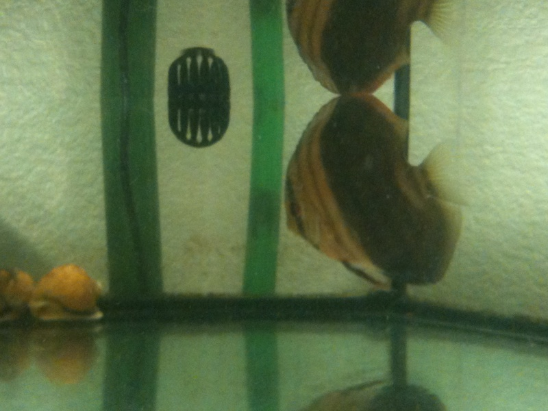 couleur discus ????? Img_0112