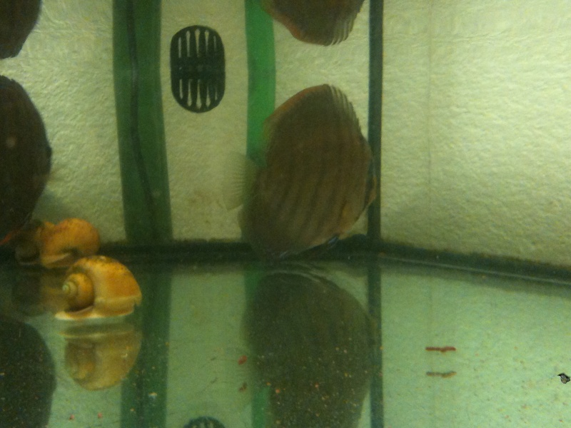 couleur discus ????? Img_0114