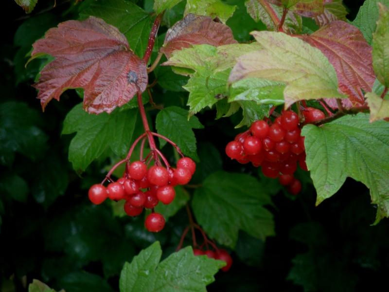 Mayenne mi-octobre, fruits d'automne Legran14