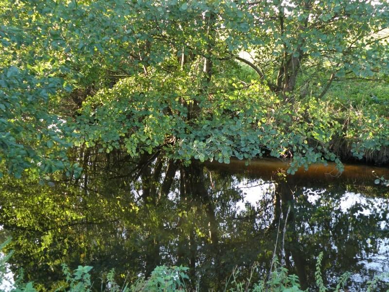 Mayenne mi-octobre, fruits d'automne Legran24