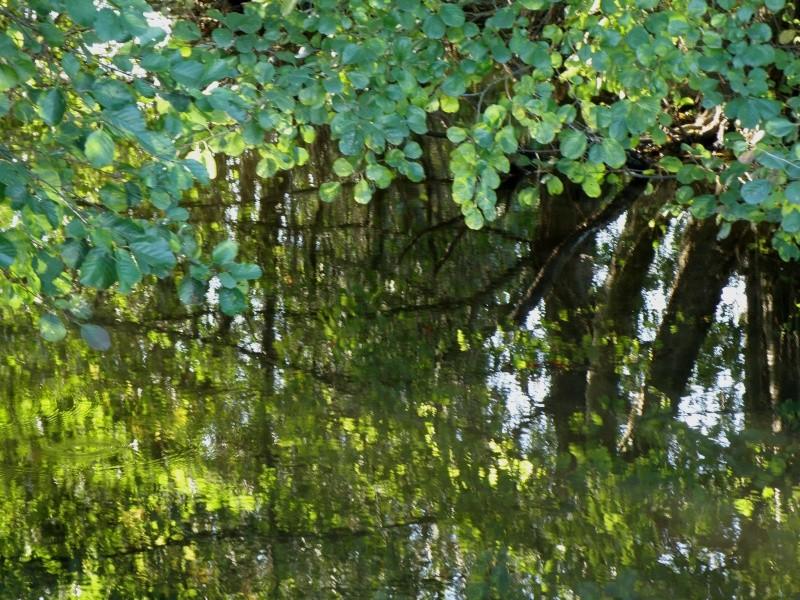 Mayenne mi-octobre, fruits d'automne Legran25