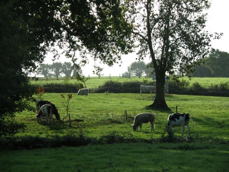 Mayenne mi-octobre, fruits d'automne Legran30