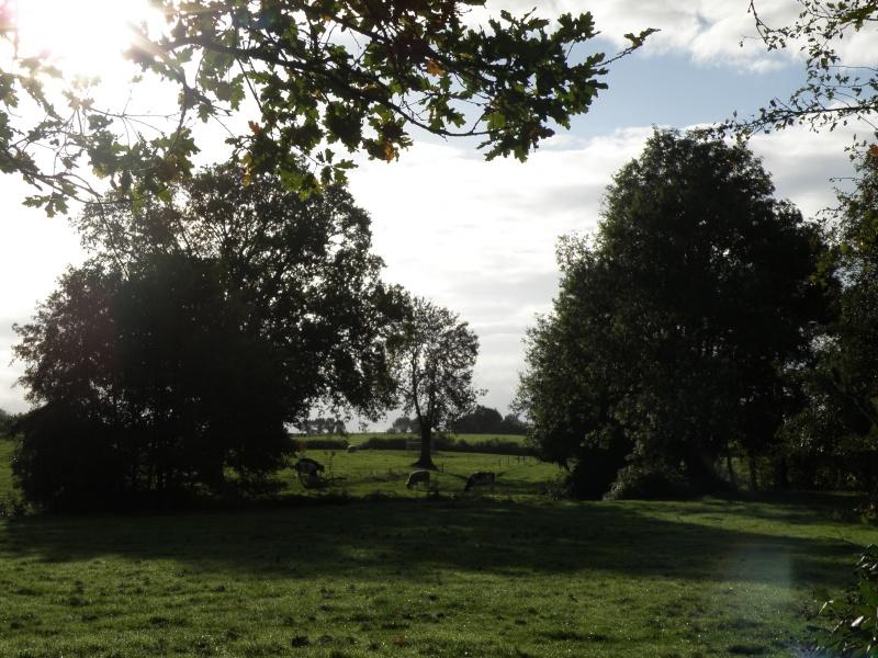 Mayenne mi-octobre, fruits d'automne Legran31