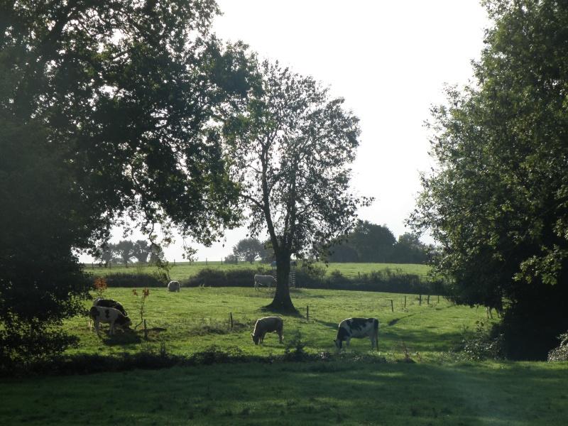 Mayenne mi-octobre, fruits d'automne Legran32