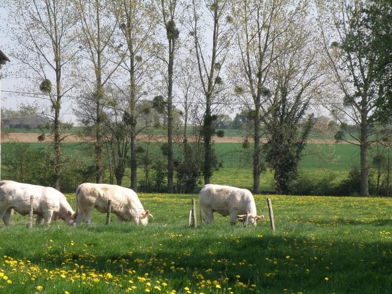 Avril, transparence des arbres Legran34