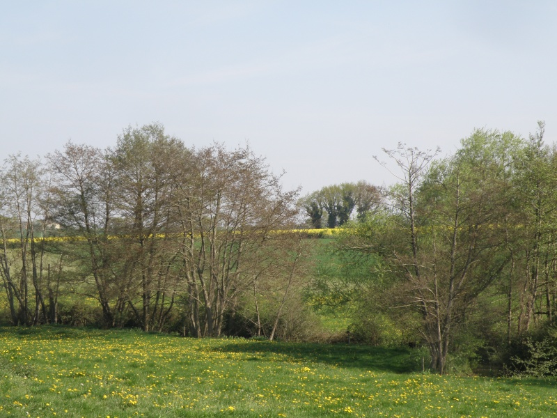 Avril, transparence des arbres Legran35