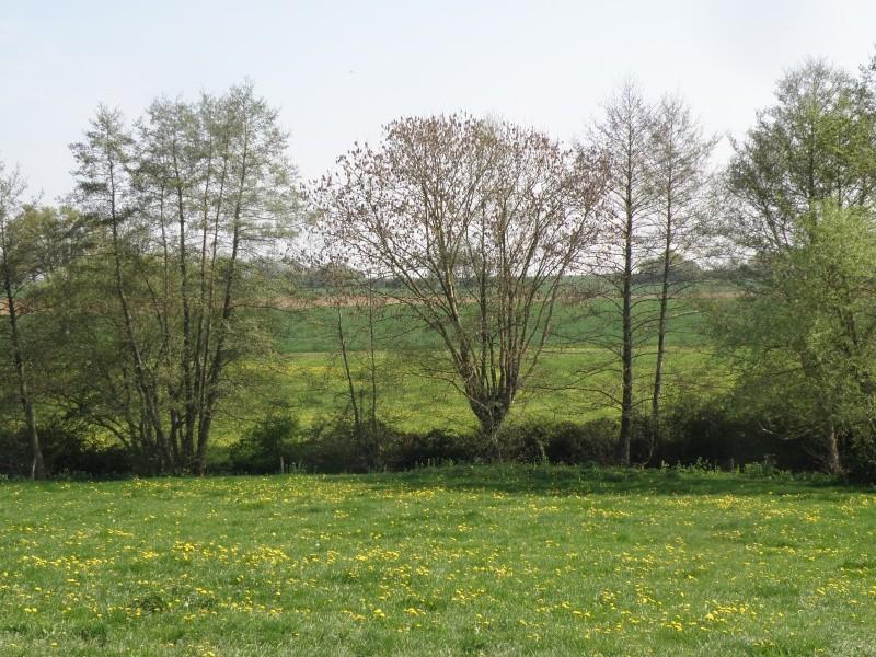 Avril, transparence des arbres Legran36