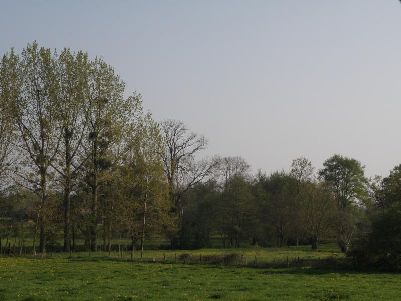 Avril, transparence des arbres Legran38
