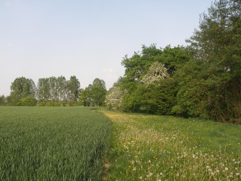 Avril, transparence des arbres Legran39