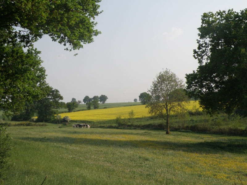 Avril, transparence des arbres Legran41