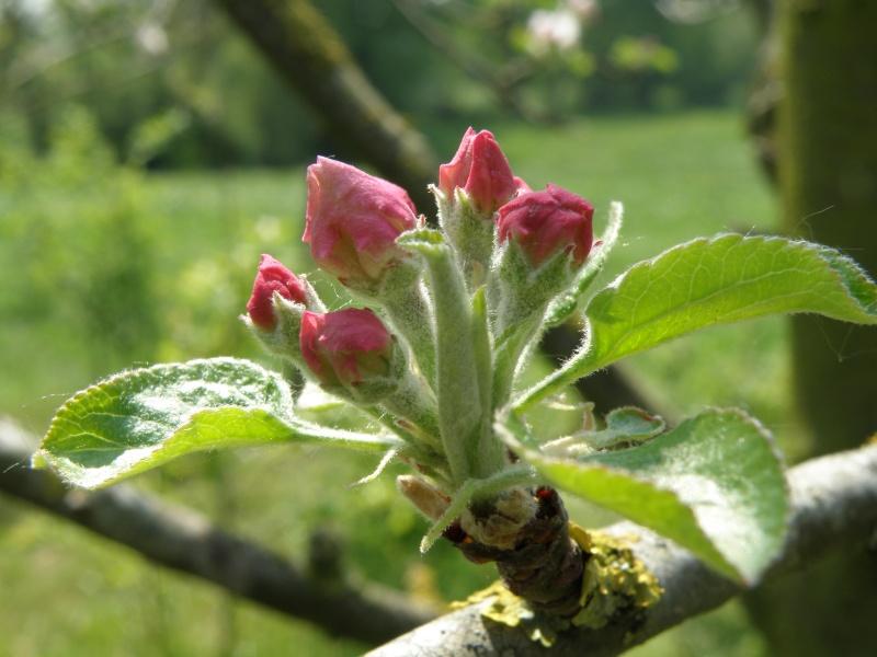Avril, transparence des arbres Legran42
