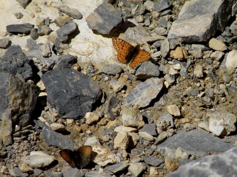 Au dessus du col d'Izoard (2361m) Queyra27