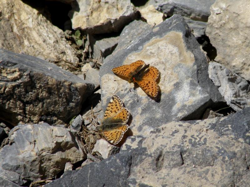 Au dessus du col d'Izoard (2361m) Queyra28