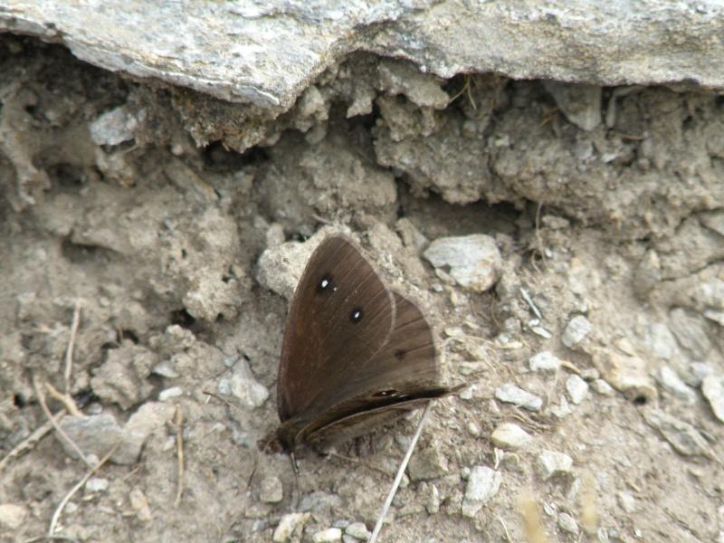 Papillons du Queyras Queyra73