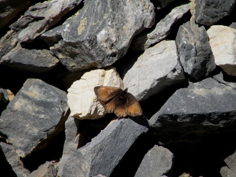 Papillons du Queyras Queyra76