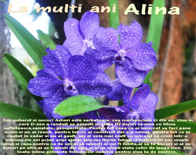 Alina Stasiuc-femeie clepsidră - Pagina 4 Alina10