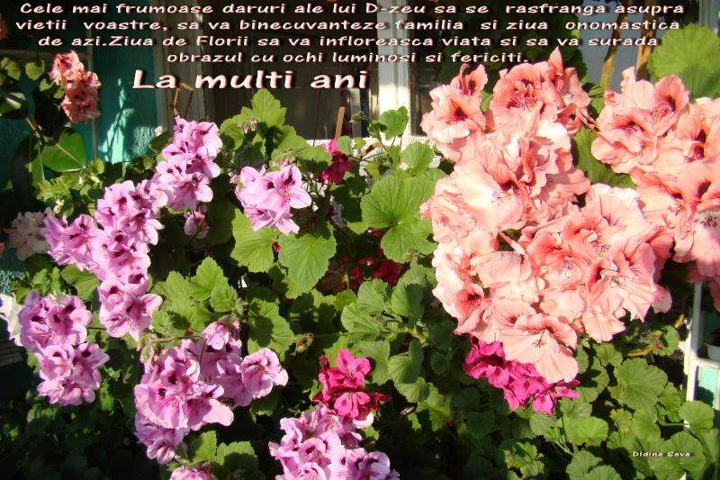 La Multi Ani ! Florii10
