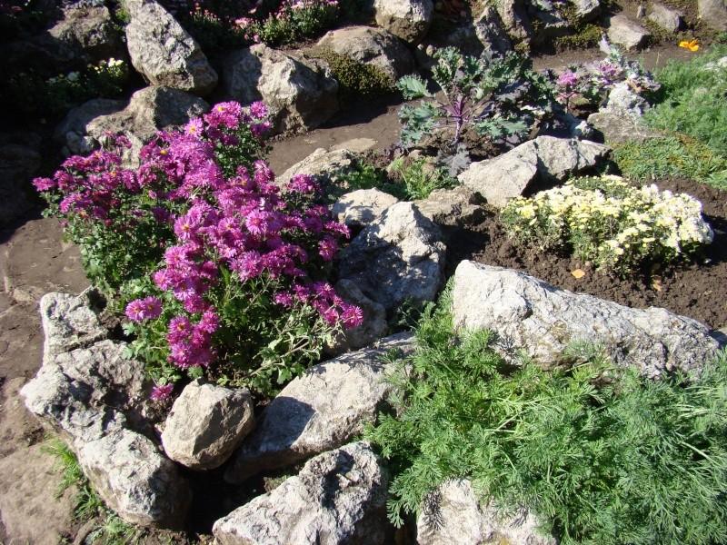 Gradina Botanica din Iasi Gradin17