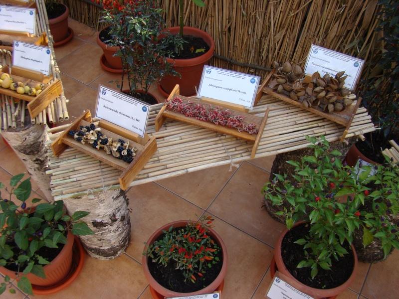 Gradina Botanica din Iasi Gradin25