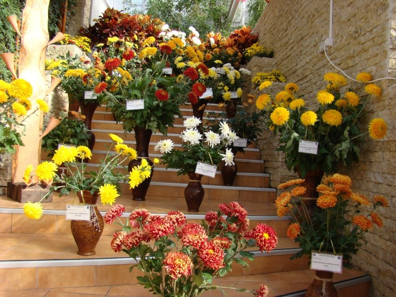 Gradina Botanica din Iasi Gradin37