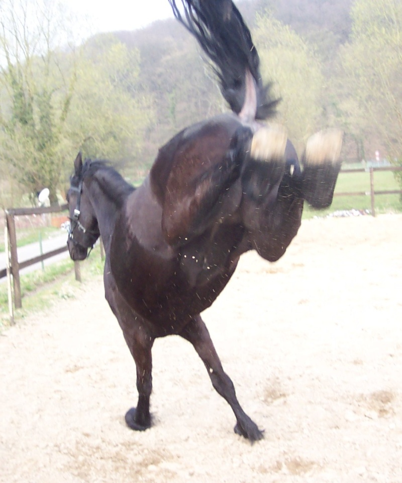 les fesses de votre cheval ;) (septembre ) 66110